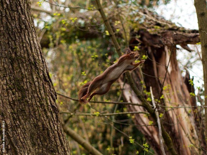 Il salto dello scoiattolo – © Claudia Rocchini