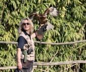 Dimostrazione di volo dei rapaci: torna l'orario autunnale